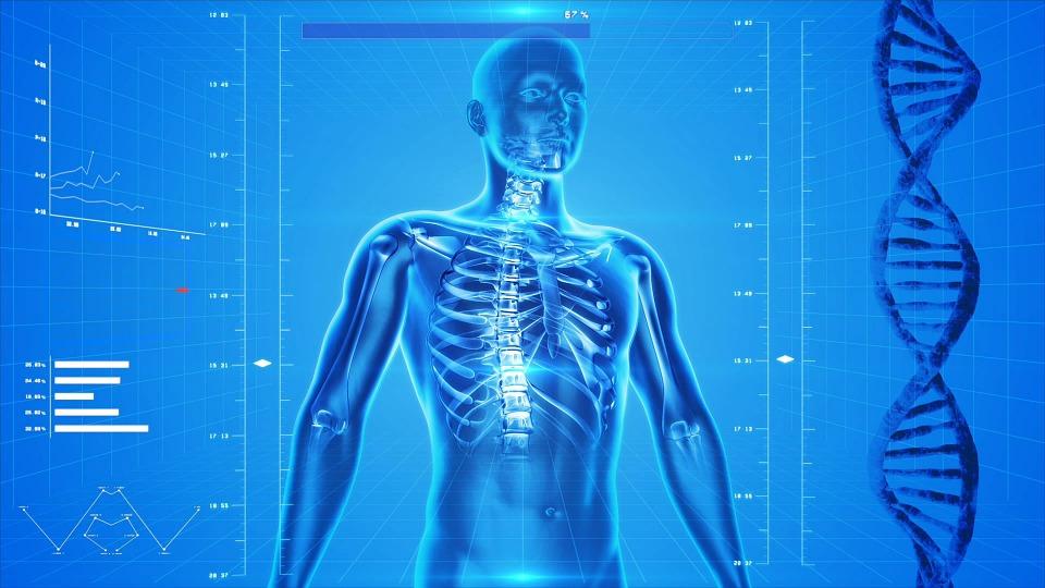 Imagem em 3D do corpo humano